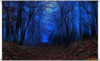 Night Sets In The Enchanted Forrest