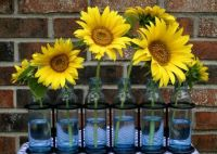 Sunflowers in blue vases