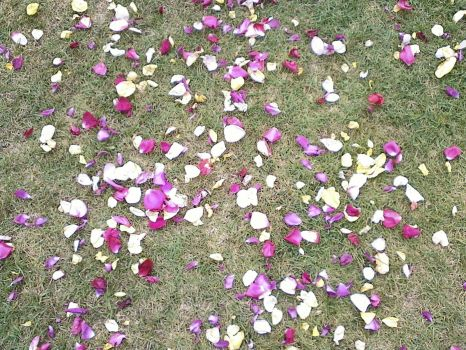 Some petals on the grass