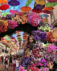 Flower festival in Romania