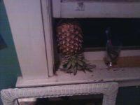 happy pineapple day!