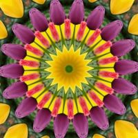 kaleidoscope 317 tulips again small