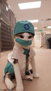 Dr Cats