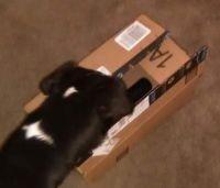 Lulu got mail