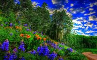 Forest with Wildflowers