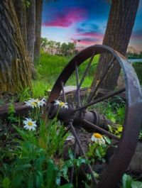 Nature adorning an old wheel