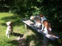 3 feriehunde i varmen