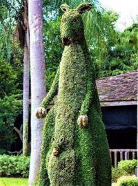 Kangaroo and Baby Joey Topiary- Busch Gardens- Tampa, Florida