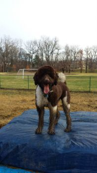 Kinky loves play in the mud