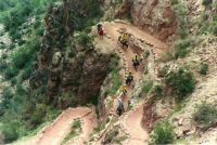 Mule Train, Bright Angel Trail, Grand Canyon NP