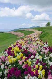 Květinové zahony...