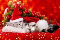 """Waiting for Santa...""""I'm soooo sleepy."""""""