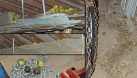Squirreling away walnuts: The tractor shed