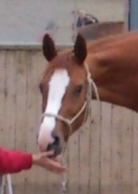 The head of my beautiful horse 1