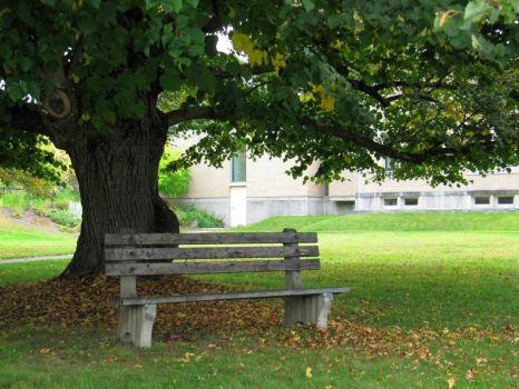Fanconia NH Bench