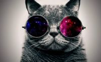 6904647-cool-cat-hd-wallpapers-widescreen_huRYI5U