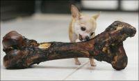 for Tom: tiny dog