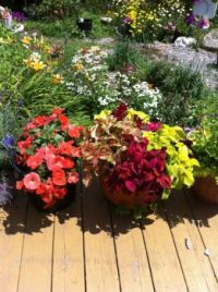 Flowers of Summer 2015