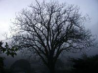 Tree at dawn in Tuscany