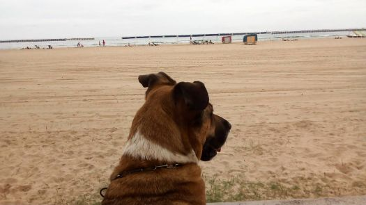 Barny at the beach