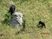 Mama Bear & Cub