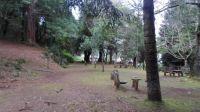 137 Pico das Pedras-Madeira