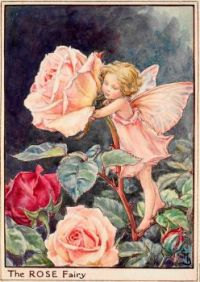 The Rose Fairy