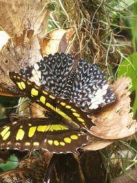 Butterflies - It takes two to tango ;-)