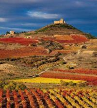 Rioja, Spain Vinyard