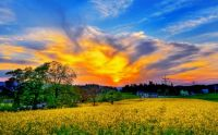 beautiful-spring-scenery