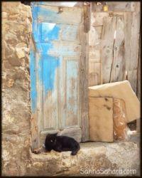 Black cat and splash of blue, Tunisia