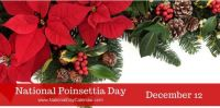 Today Is National Poinsettia Day!!