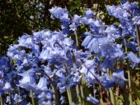 bluespring
