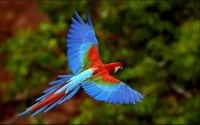 THEME FOREST ANIMALS:- Parrot