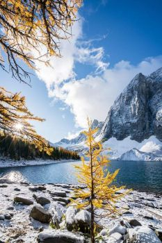Beautiful Gold and Blue Contrasts in the Canadian Rockies,
