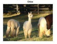 Rest In Peace, dear Chloe (in the middle)