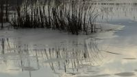 Icy reflection Wickham Marsh Port Kent NY