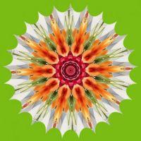 Floral Kaleido 🌻🌺🌼