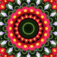 kaleidoscope 323 pink daisies very large