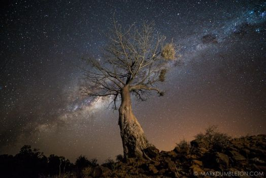 Giant Baobab under the African sky
