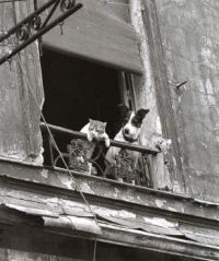 Cats and dogs in Paris
