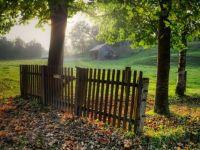 A Foggy Fall Morning