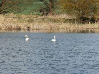 Labutě - the swans