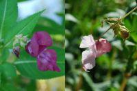 hezké květy u rybníků