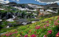Flowers Amid the Mountain Snow