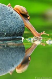 Snail Reflection