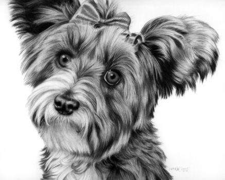 Maxine Pet Portrait