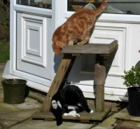 Ferdy and Sophie - upstairs, downstairs...