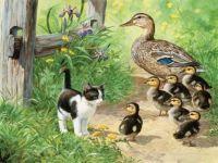 Duck Inspector