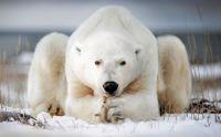 yogai-bear